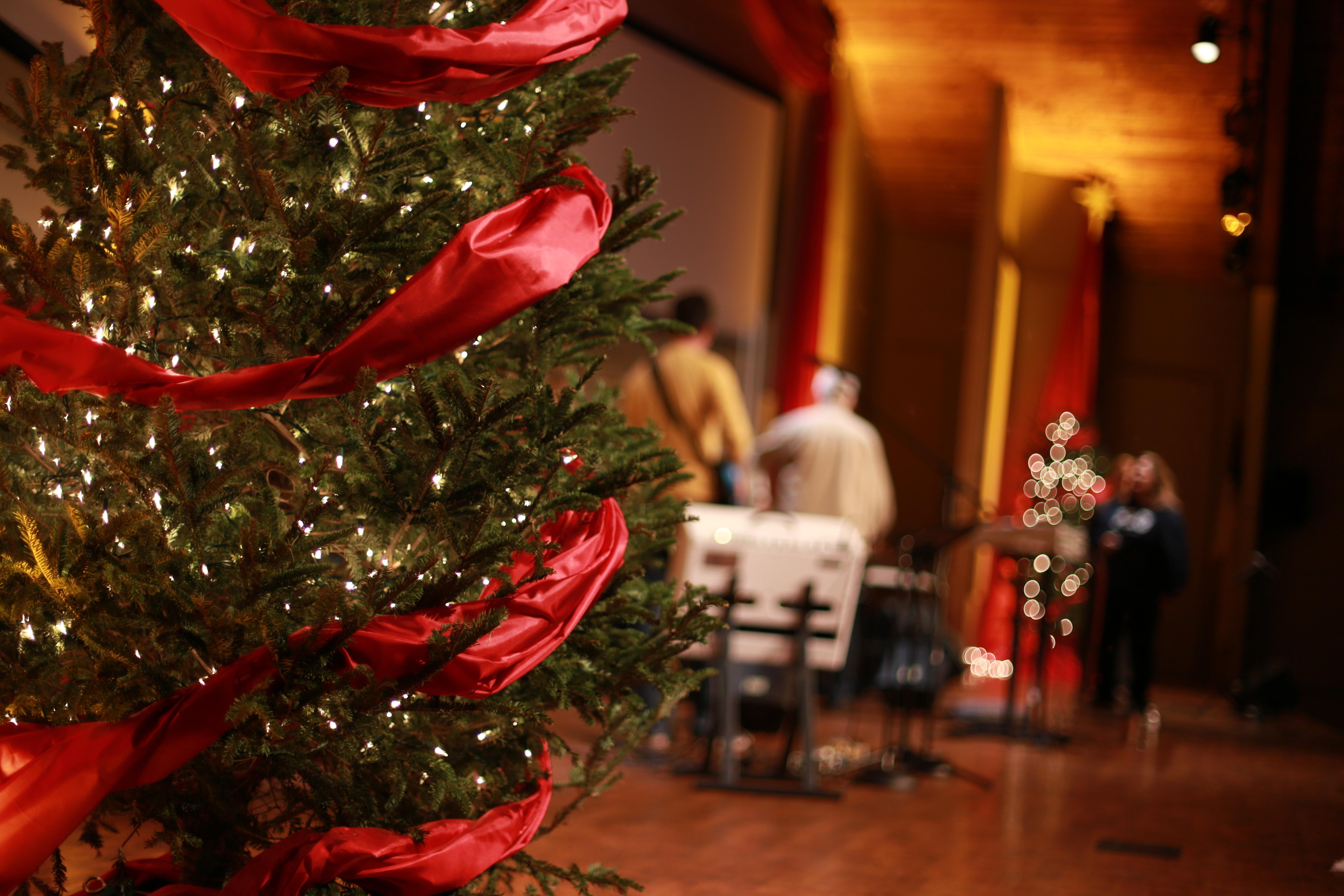 Cheep Christmas Trees